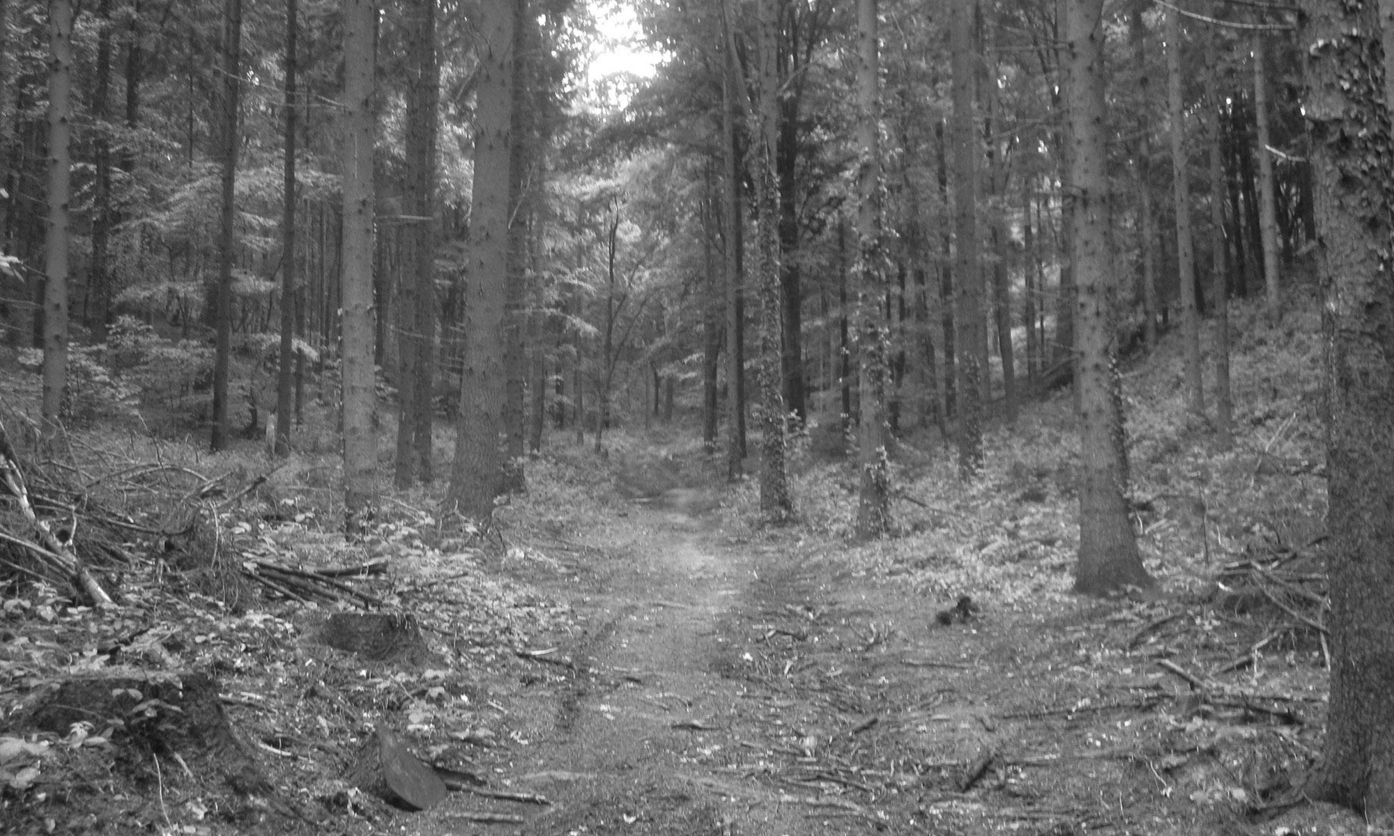 Het reichswald bij de Diepen in Milsbeek